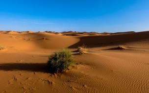 природа, пустыни, сахара