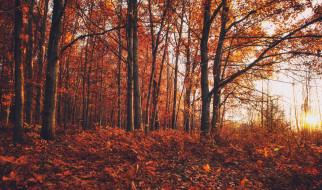 краски, лес, осень