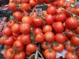 еда, томаты, помидоры
