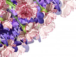 цветы, гвоздики, букет, орхидеи