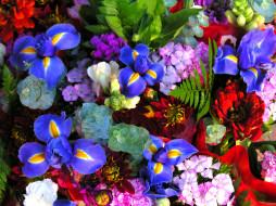 Циннии, Гвоздики, Ирисы, фото, Цветы, Майоры