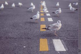 календари, животные, птица, дорога