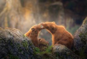 камни, медведи, два медведя