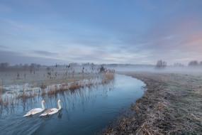 река, лебеди, туман