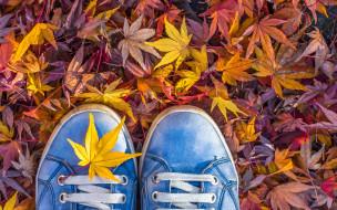 разное, одежда,  обувь,  текстиль,  экипировка, листья, шнурки, осень, кеды