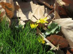цветы, трава, листья