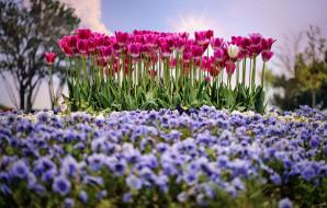 весна, солнце, тюльпаны