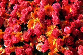 розы, герберы