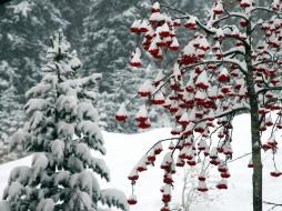 природа, зима, рябина, ягоды, снег