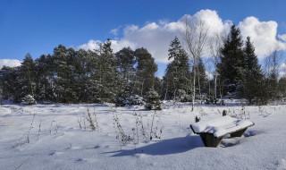 природа, зима