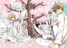 аниме, tsubasa reservoir chronicles, существо, девушки, сакура, дерево, парни, цветение