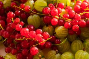 фрукты, виноград, еда
