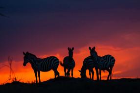 закат, африка, зебры, саванна