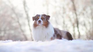 животные, собаки, зима, снег, пес, собака