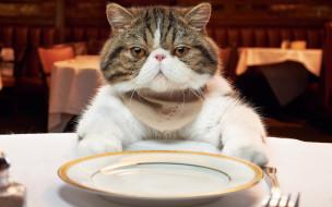 животные, коты, кот