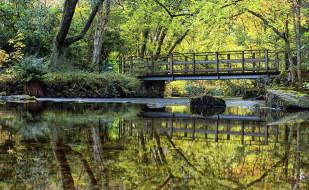 японский, мостик, водоем, садик