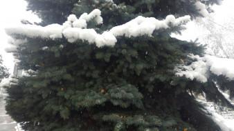 ёлка, снег