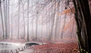 мост, парк, осень, туман