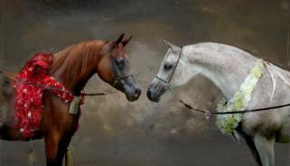 пара, мазки, кони, взгляд, портрет, живопись, цветы, серый, лошади, белый, картина, гнедой, фон, морды, арт
