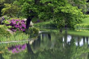 пруд, деревья, цветы
