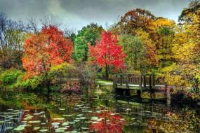 пруд, осень, мостик
