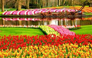 Keukenhof Flower Garden, Netherland
