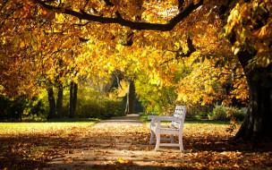 аллея, скамейка, листопад, осень, парк