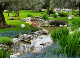 ручей, парк, цветы