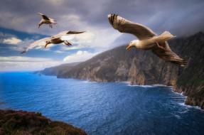животные, Чайки,  бакланы,  крачки, джонатан, ливингстон, берега, полет, три, птицы, небо, пейзаж, облака, чайки, тучи, крылья, природа, море, летят, скалы