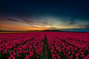 тюльпаны, небо, весна, красивые