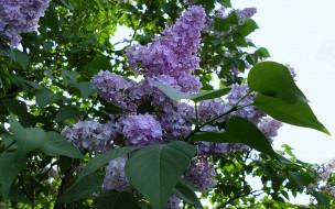 ветка, цветы