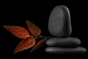 камни, листок, отражение