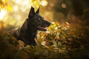 собака, листья, морда, портрет