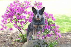 друг, собака, цветы