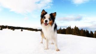 животные, собаки, собака, снег, зима, лес, небо