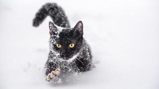 животные, коты, кошка, кот, снег, черный