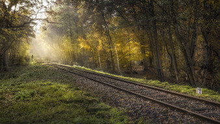 железная дорога, лес, свет