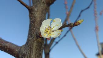 цветы, цветущие деревья ,  кустарники, весна, 2018