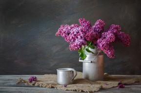 цветы, сирень, лиловый
