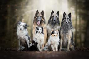 собаки, природа, друзья