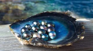 разное, ракушки,  кораллы,  декоративные и spa-камни, ракушка, море, жемчужины, свет, блеск, черный, жемчуг