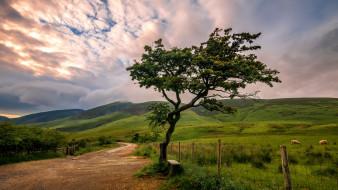 природа, деревья, простор