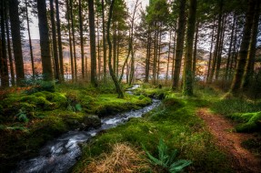 обои для рабочего стола 2048x1360 природа, лес, простор