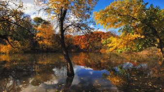 водоем, природа, лес, деревья