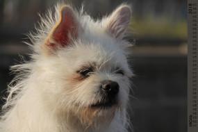 взгляд, собака, морда