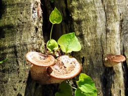 грибы, стволы, листья