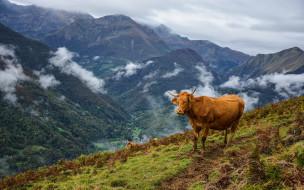 облака, горы, коровы