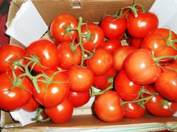 помидоры, еда, томаты