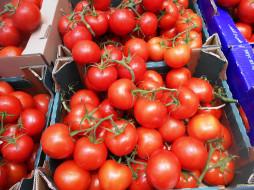 томаты, еда, помидоры