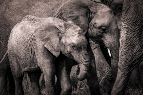 природа, Африка, слоны